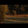 03 12 49 630 meadow5 detail 4