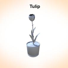 Tulip 3D Model