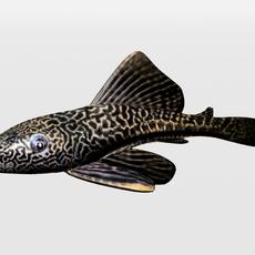 Catfish 3D Model