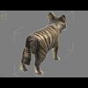 04 16 26 197 tiger wire2 4