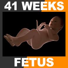 Human Fetus 41 Weeks 3D Model