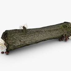 Dead tree trunk with mushrooms 3D Model