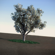 Apple spring with flowers LowPoly tree 3D Model