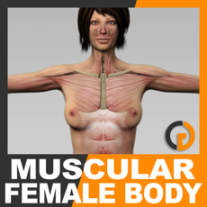 Human Female Body and Muscular System - Anatomy 3D Model