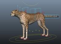 cheetah for Maya 1.1.3