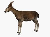 Low poly goat 3D Model