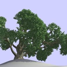 BIG TREE 3D Model