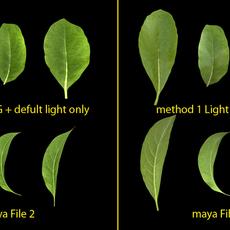 teal leaf 3D Model
