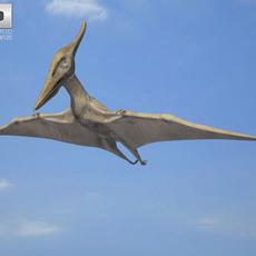 Pteranodon (Pteranodon Longiceps) 3D Model