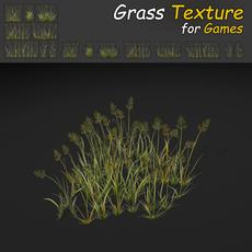 Bent Grass Texture