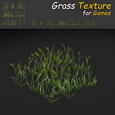 Timothy Grass Texture