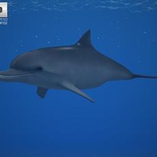 Common Bottlenose Dolphin (Tursiops Truncatus) 3D Model