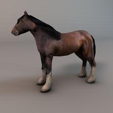 Heavy draft horse 3D Model