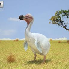 Dodo (Raphus Cucullatus) 3D Model
