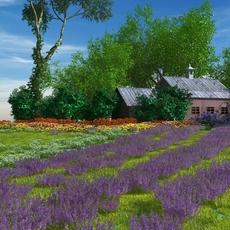 Lavender field 3D Model