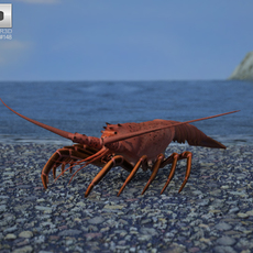 Spiny Lobster (Palinuridae) 3D Model