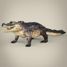 Realistic Crocodile 3D Model