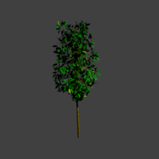 40 Trees with different colors low poly high poly 3D Model