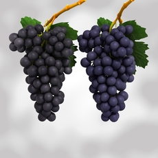 Grapes Black and Blue 3D Model