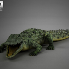 Common Crocodile High Detailed Rigged 3D Model