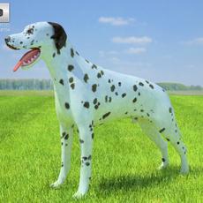 Dalmatian 3D Model