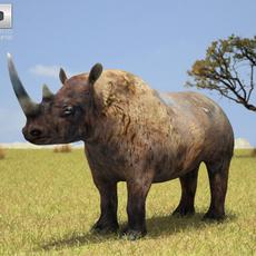 Black Rhinoceros 3D Model
