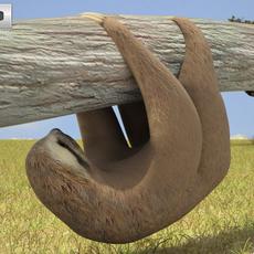 Three-Toed Sloth 3D Model