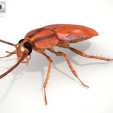 Cockroach High Detailed Rigged 3D Model