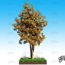 Birch + grass 3D Model