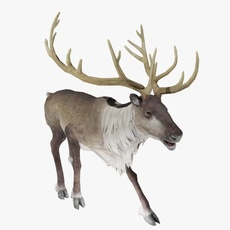 Reindeer Animated 3D Model