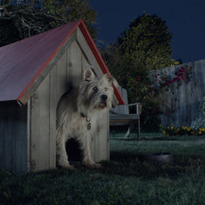 Travelers Insurance Dog Finds Peace of Mind with CG Help from motion504