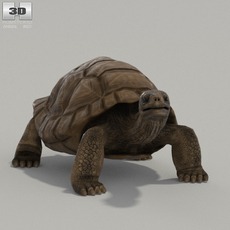 Galapagos Turtle High Detailed Rigged 3D Model