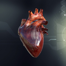 Human Heart Anatomy 3D Model