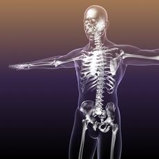 Skeleton of Human in Body 3D Model