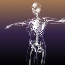 Female Skeleton in transparent Woman Body 3D Model