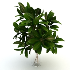 Plant pipal 3D Model