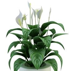 Plants in pot 3D Model