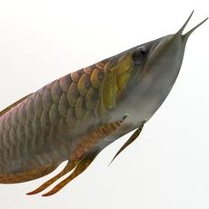 Arowana fish 3D Model