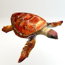 Loggerhead sea turtle 3D Model