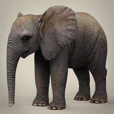 Low Poly Realistic Baby Elephant 3D Model