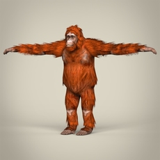 Low Poly Realistic Orangutan 3D Model