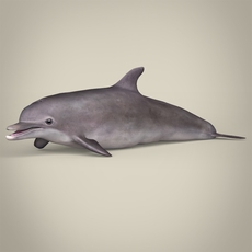 Low Poly Realistic Dolphin 3D Model