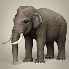 Low Poly Realistic Elephant 3D Model
