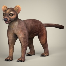 Low Poly Realistic Fossa 3D Model