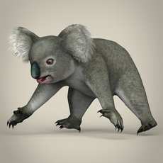 Low Poly Realistic Koala 3D Model