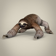 Low Poly Realistic Sloth 3D Model