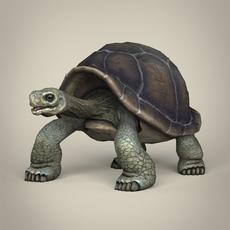 Low Poly Realistic Tortoise 3D Model