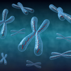 Chromosomes 3D Model