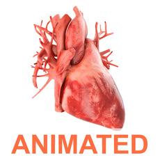 Human heart animated v3 3D Model