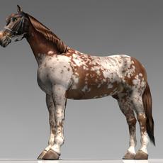 Pinto horse 3D Model